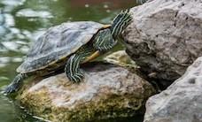 animal-stones-turtle-2085