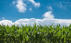 clouds-corn-field-2678