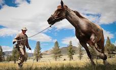 horses-in-field-011914350712E346