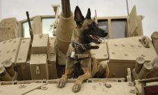 military procurement